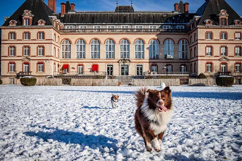 Cité Universitaire de la Ville de Paris, chien courir, pavillon principal, hiver, neige, poursuivi par un petit chien