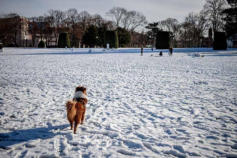 Cité Universitaire de la Ville de Paris, chien sur la pelouse principale, neige, hiver, nature, paysage