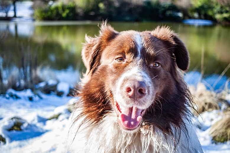 Parc Montsouris en hiver, neige, chien de face, sourire, bord de lac, nature, paysage