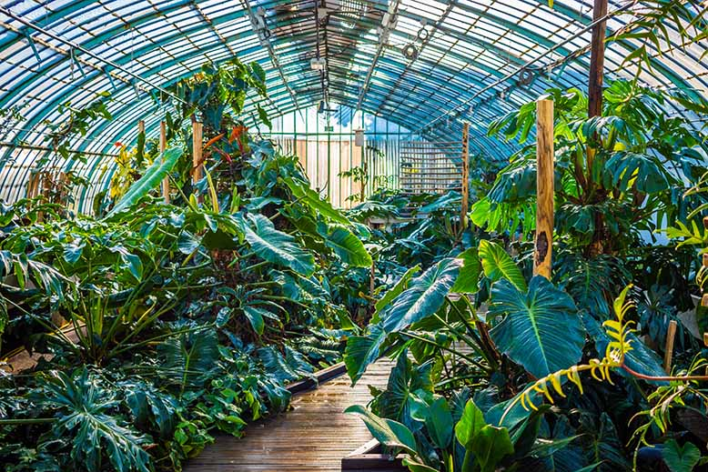 Jardin des serres d'auteuil Bois de Boulogne esprit tropical petite serre passage en bois humide